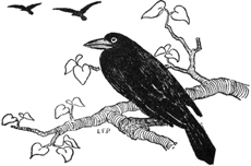 The Language of the Birds, illustration by Lucy Fitch Perkins