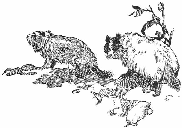 Illustration for The First Summer in the New World by Warner Carr